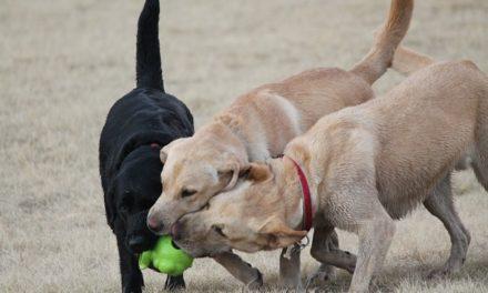 Reclamare il risarcimento dopo morso di cane? Come comportarsi correttamente