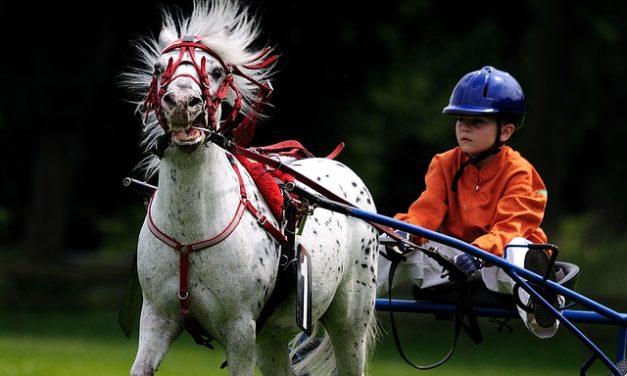 Sfoglia un cavallo