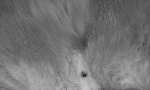 Castrazione della fattrice: è così che ti prendi cura del tuo animale dopo l'operazione