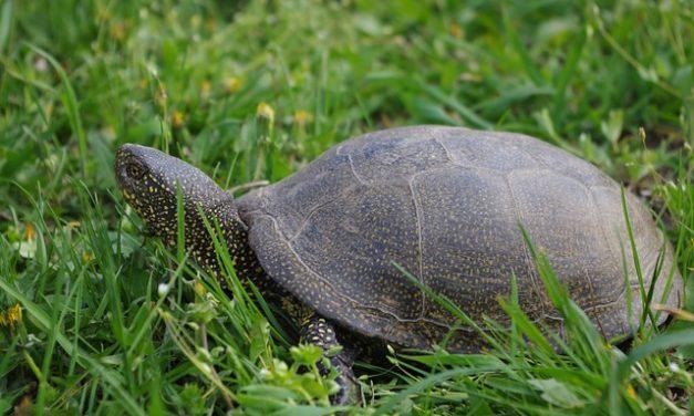 La mia tartaruga non mangia – questo è quello che si può fare