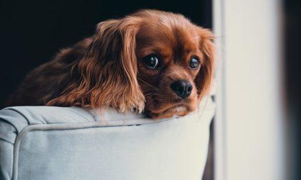 Lasciare i cani da soli a casa: bisogna tenerne conto