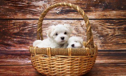 Perdita di capelli in primavera: come spazzolare il cane