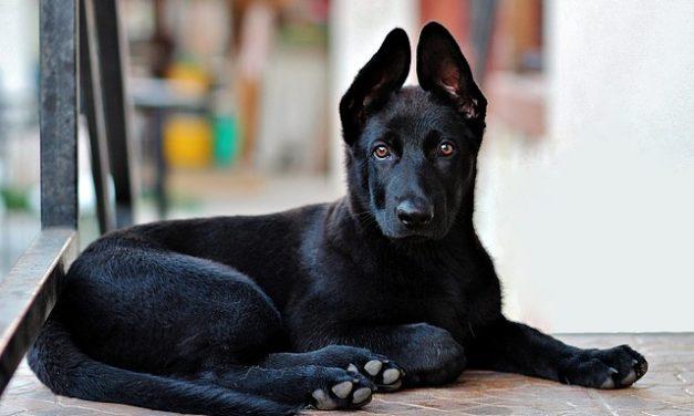 Portare i cani dalla Spagna alla Germania: cosa si dovrebbe notare