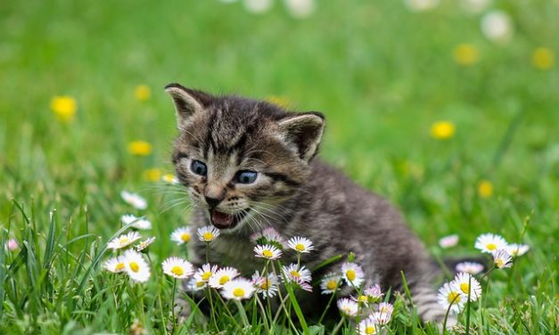 Protezione gatto: fissare correttamente il balcone
