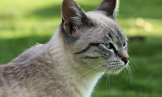 Cat avvelenato? Misure immediate