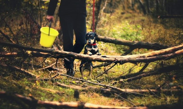 Cestino gatto per cani: come abituarsi ad esso