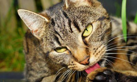 Il gatto non torna a casa: cosa fare?