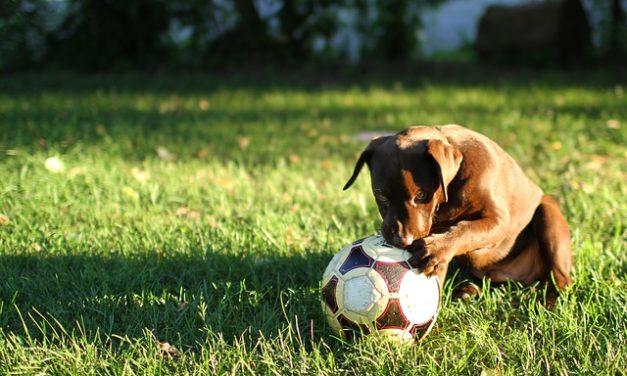 Prevenire la carenza di calcio nel cane: è così che funziona