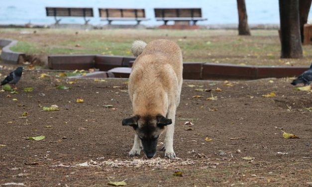 Cane ha problemi di stomaco: questo è come preparare una dieta sana