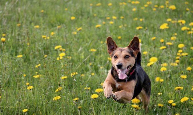 Il cane salta alle persone: è così che ti abitui a lui