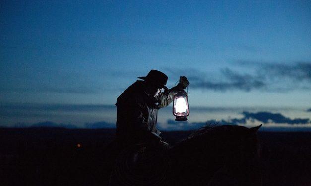 Draghi nani barbuti: controllare la luce nel terrario secondo il tempo